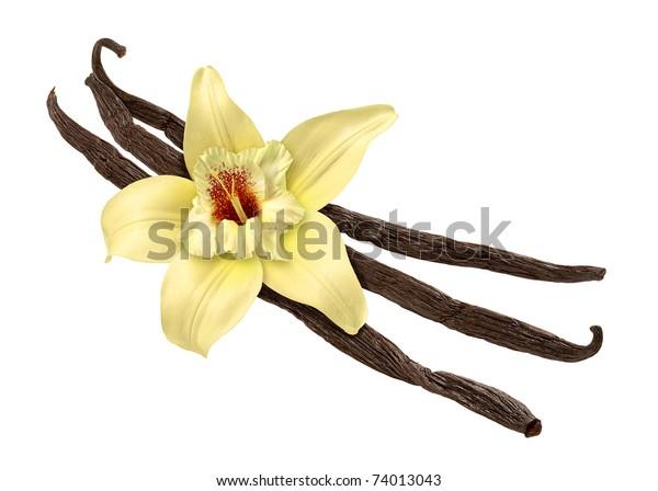 Feijão de baunilha e Flor isolados com caminho de recorte