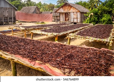 Vanilla dried on the tables in the small village in Madagascars Vanilla Coast near Mananara