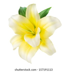 Vanilla Flower isolated on white. With clipping path
