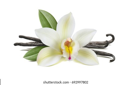 Vanilla flower, pods, leaves isolated on white background, horizontal composition