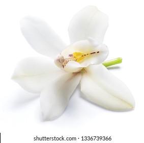 Vanilla orchid vanilla flower isolated on white background.