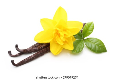Vanilla pods and flower isolated on white background