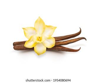 Vanilla-Pods einzeln. Getrocknete Vanillestangen und Vanilleblume auf weißem Hintergrund. aromatische Zutat zum Backen.
