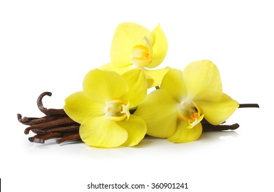 Vanilla pods and orchid flowers isolated on white background