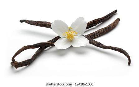Vanilla sticks with jasmine flower, isolated on white background