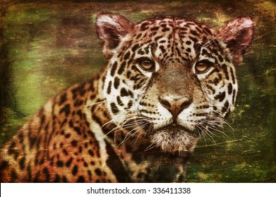 Vanishing Amazonian wildlife: vintage style image of a Jaguar - Panthera onca. The jaguar is the third-largest feline after the tiger and the lion, and the largest in the Western Hemisphere.