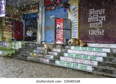 VARANASI, INDIA - AUGUST 11: Heavy monsoon rain causes a flash flood and stray dogs and shopkeeper take shelter on August 11, 2011 in Varanasi, India.
