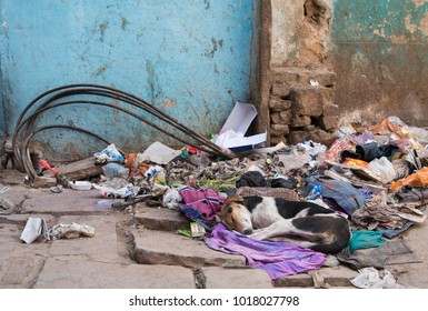 Varanasi, India- March 14 2017: Abandoned homeless Dog sleeping on a pile of garbage wastes at the streets of Varanasi in India.