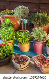 Variation of flower pots with herbs and other plants