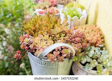 Variation of flower pots with succulents in garden