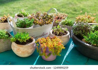 Variations of succulent for stone garden and terrace