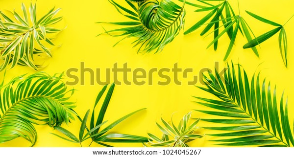 Variations Tropical Palm Leaves Yellow Background Stock Photo Edit Now 1024045267 Tropical leaves on yellow background. https www shutterstock com image photo variations tropical palm leaves yellow background 1024045267