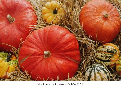 Variaty of colorful pumpkins on seasonal farmer`s market, autumn harvest, decorative vegetables for autumn fest, selective focus