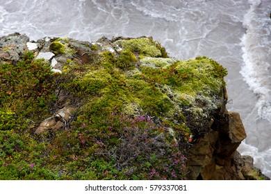 Varicolored moss at Barnafoss area, Iceland