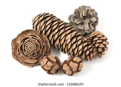 varied pine cones on white background