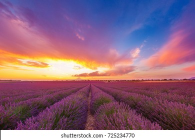 variegated green-purple rows of a lavender field against a bright colorful sunset