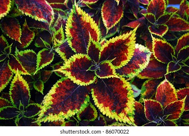 Variegated leaves forming an abstract pattern