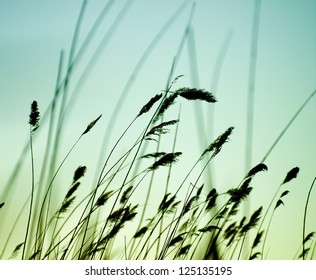 Variegated structures of flowering grass.