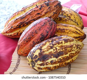 Varieties of cacao pods, the seeds of which are used for cocoa and chocolate