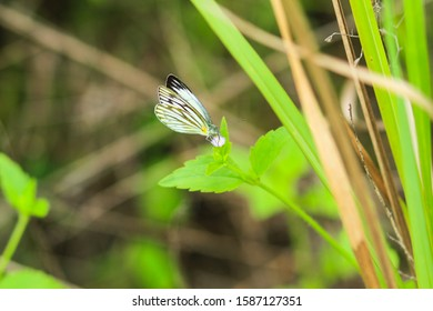 A variety of beautiful butterflies in nature