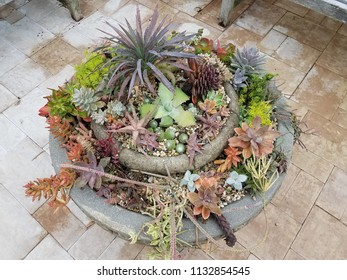 a variety of cactus and succulents in cement flower pot on stone tiles