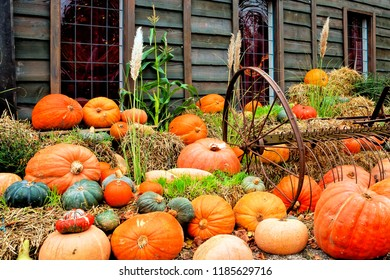 Variety of colorful pumpkins. Autumn harvest scene at a pumpkin patch.