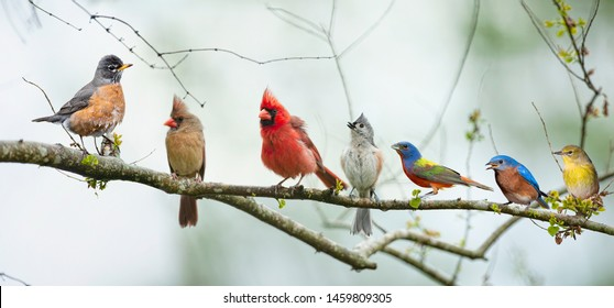 Variety of Colorful Songbirds Perched on a Branch with Overcast Skies in Background
