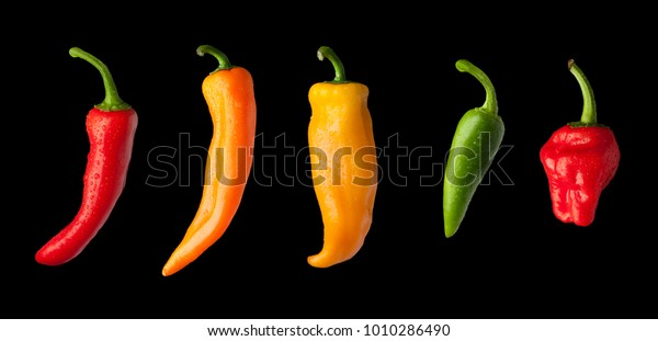 A variety of colourful chilli peppers covered in fresh water droplets cut out in a line on a black background.