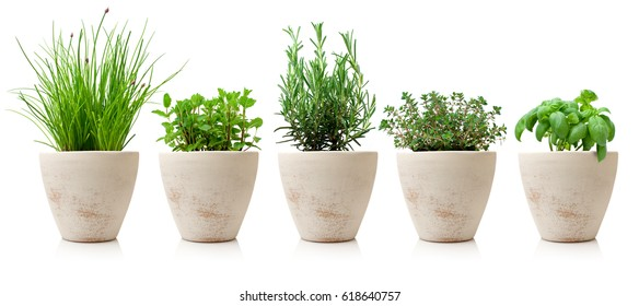 variety of cooking herbs
