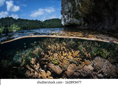A variety of coral colonies grow along the edge of a reef dropoff in Raja Ampat, Indonesia. This region is known for its spectacular marine biological diversity and scuba diving.