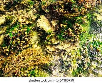 Variety of Corals, Kurusadai Island, Gulf of Mannar Biosphere Reserve, Tamil Nadu, India.