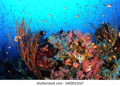 A variety of corals in the water of the Sabang Beach, a Philippine diving spot.
