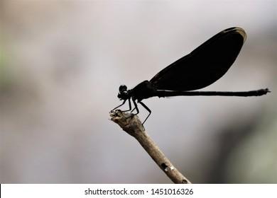 Variety of dragonflies at Tat Ton Waterfall Tat Ton National Park Chaiyaphum Province, Thailand