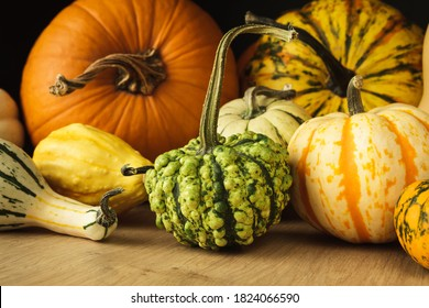Variety of edible and decorative gourds and pumpkins. Autumn composition of different squash types on wooden table.