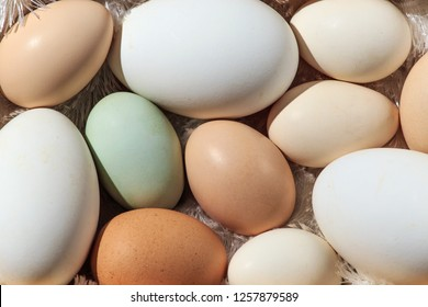 A variety of eggs, goose eggs close-up