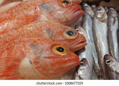 A variety of fish lies on the counter in the store, a macro.