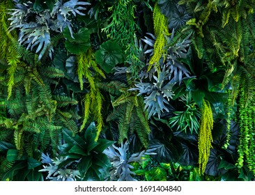 A variety of forest garden walls such as orchids,various fern leaves,palm leaves and many more.