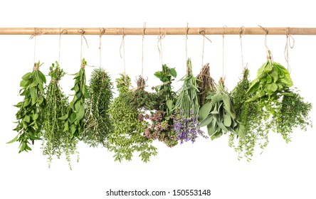 variety fresh herbs hanging isolated on white background. basil; rosemary; sage; thyme; mint; oregano, marjoram; savory; lavender