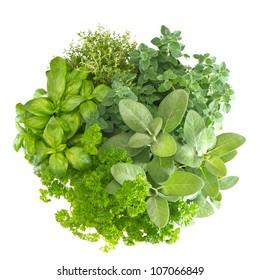 variety fresh mediterranean herbs. marjoram; parsley; basil; rosemary; thyme, sage