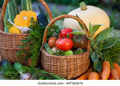 Variety of fresh organic vegetables and herbs in the garden.