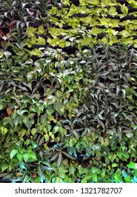 variety of green plants growing on wall garden