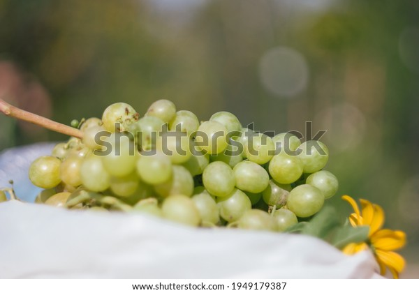 variety-green-white-grapes-delight-600w-