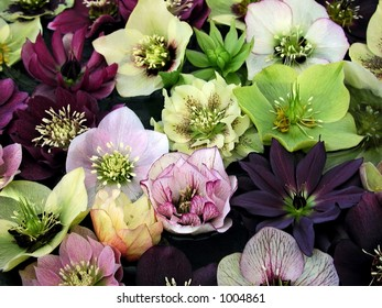 A variety of hellebores, also known as lenten roses, float in a bowl of water