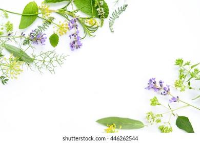 Kräutervielfalt auf weißem Hintergrund