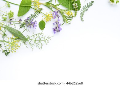 variety of herbs on white background