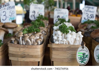 A variety of mushrooms on display at a market.