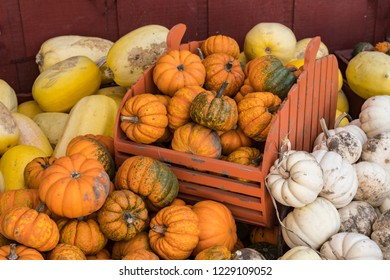 Variety of October Halloween Pumpkins and Squash and Little Red Wooden Cart.