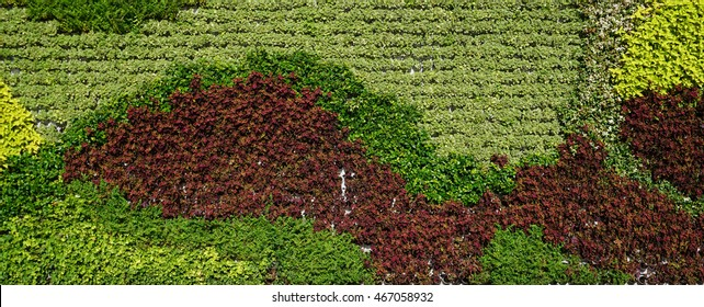 Imagenes Fotos De Stock Y Vectores Sobre Vertical Garden Texture