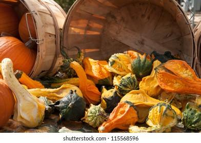 A variety of pumpkins and squash at a farmers market