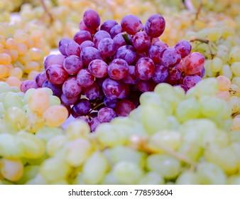 variety of purple and green grapes closeup, strong bokeh